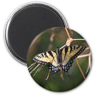 Imã Ímã da borboleta da Andorinha-Cauda