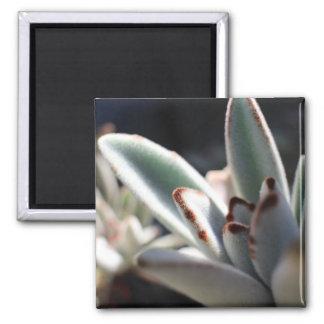 Imã Ímã da foto da planta do Succulent
