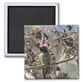 Imã Ímã da foto do colibri de Anna