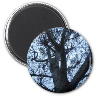 Imã Ímã da fotografia da silhueta da árvore