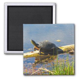Imã Ímã da tartaruga