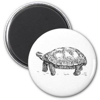 Imã Ímã da tartaruga/tartaruga
