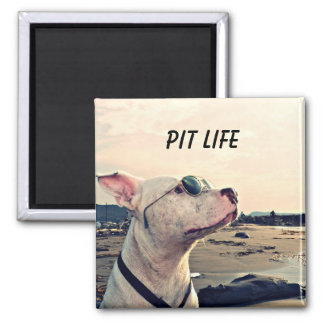 Imã Ímã da vida do pitbull