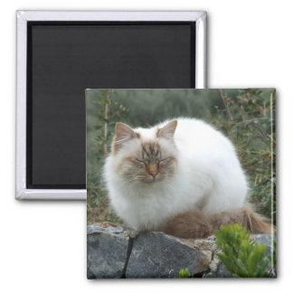 Imã Ímã de cabelos compridos do gato da pedigree