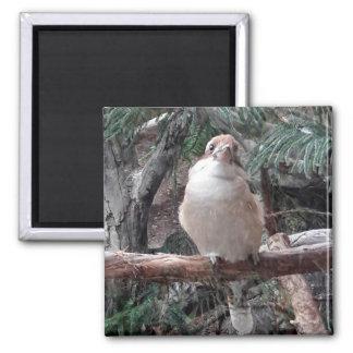 Imã Ímã de Kookaburra