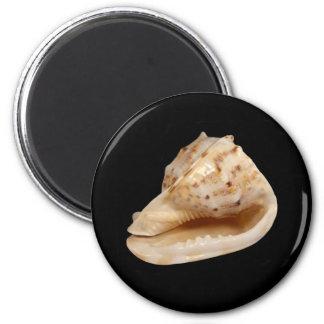 Imã Ímã de Shell do Conch