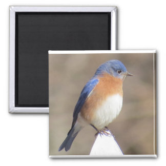 Imã Ímã do Bluebird