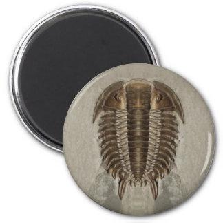 Imã Ímã do fóssil de Trilobite