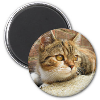 Imã Ímã do gato de gato malhado