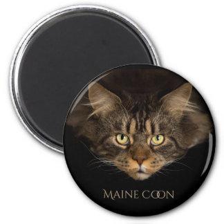 Imã Ímã do gato de Maine Coone