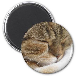 Imã Ímã do gato do sono