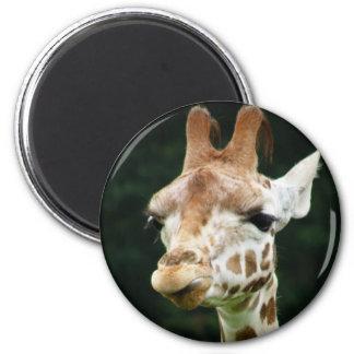Imã Ímã do girafa