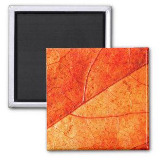 Imã Ímã do quadrado da folha do outono