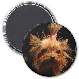 Imã Ímã do yorkshire terrier