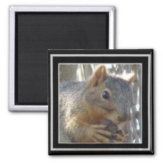 Imã Ímã - esquilo no quadro preto