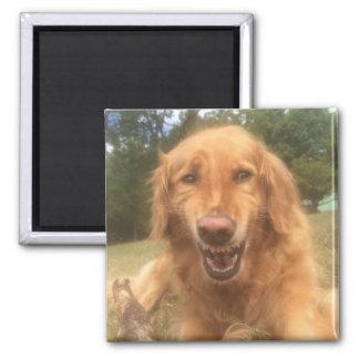 Imã Ímã inàbil de sorriso do cão inteiramente