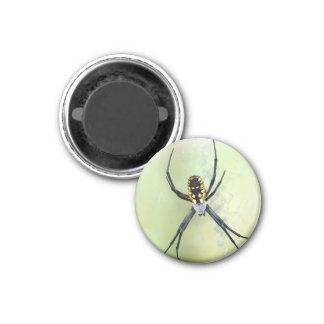 Imã Ímã preto & amarelo da aranha de jardim do Argiope