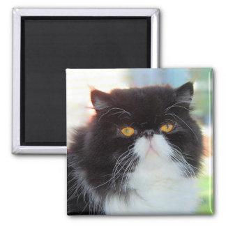 Imã Ímã preto e branco do gato persa
