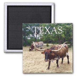 Imã Ímã quadrado dos Longhorns de Texas