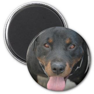 Imã Ímã redondo da imagem de Rottweiler