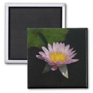 Imã Ímã roxo cor-de-rosa de Lotus Waterlily