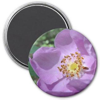 Imã Ímã roxo da flor