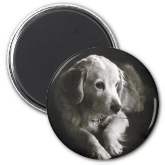 Imã Ímã triste preto e branco do cão  