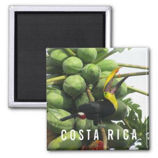 Imã Ímã tropical da lembrança de Costa Rica Toucan