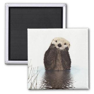 Imã Imagem bonito dos animais selvagens da lontra