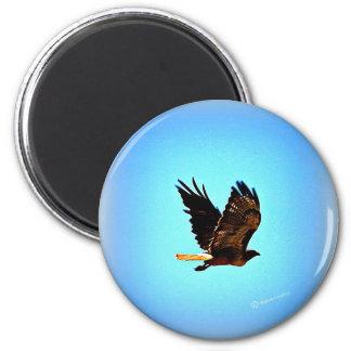 Imã Imagem vermelha do falcão da cauda