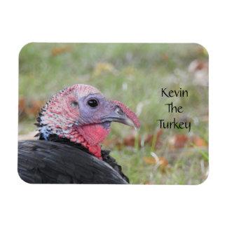 Ímã Kevin a Turquia - Wethersfield velho, CT