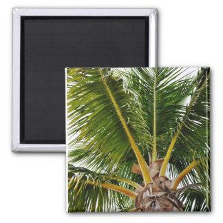 Imã Key West, tropical, palmeira