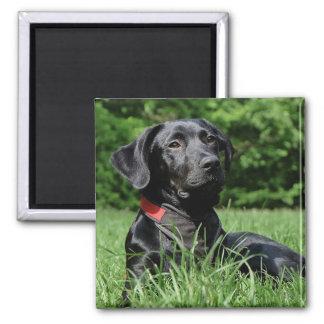 Imã Labrador preto