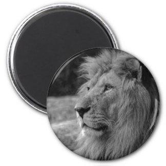 Imã Leão preto & branco - animal selvagem