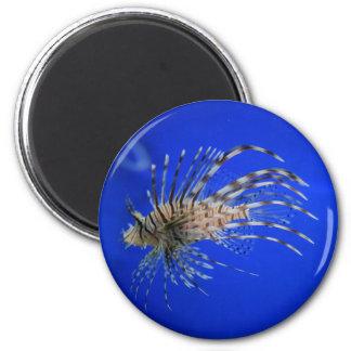 Imã Lionfish