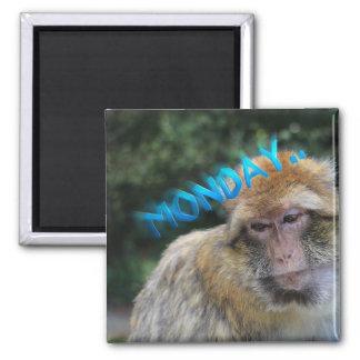 Imã Macaco triste sobre segunda-feira