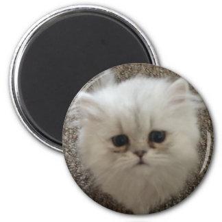 Imã Macio branco o gatinho com olhos tristes