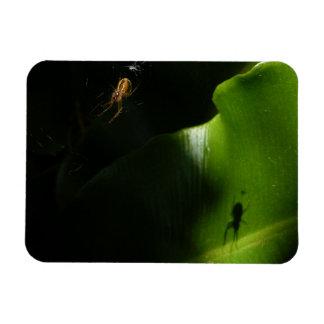 Ímã minúsculo da foto da aranha