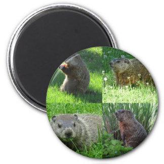 Imã Mistura de Groundhog