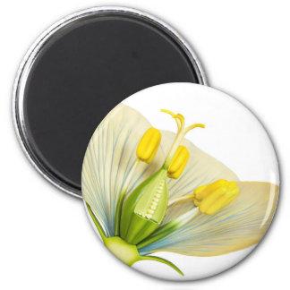 Imã Modelo da flor com estames e pistils no branco