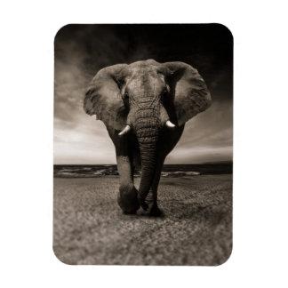 Ímã Mystical do elefante preto e branco