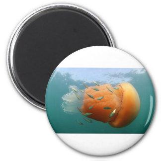 Imã Natações das medusa do tambor com cavala