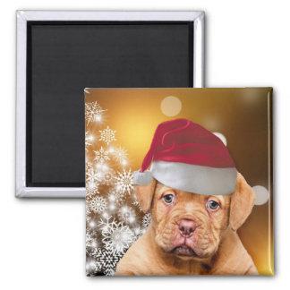 Imã Natal Dogue de Bordéus Ímã