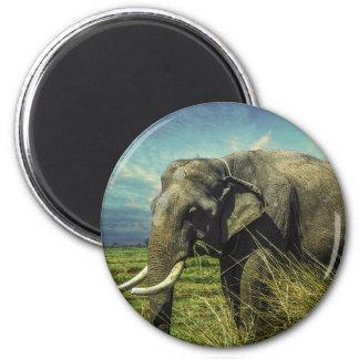 Imã Natureza do elefante