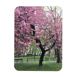 Ímã Nova Iorque cor-de-rosa da primavera das flores da