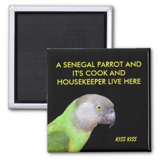 Imã O animal de estimação do papagaio de Senegal