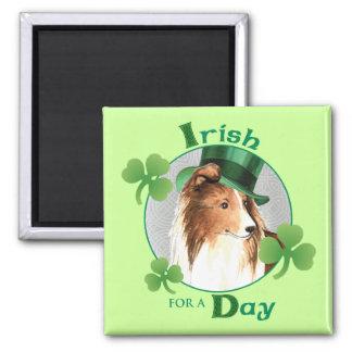 Imã O dia Sheltie de St Patrick