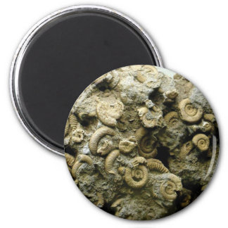 Imã o fóssil descasca a arte