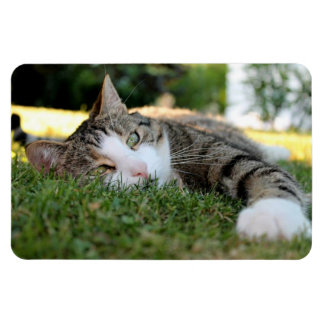 Ímã O gato de tigre cinzento e branco Daydreams na