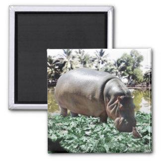 Imã O hipopótamo e o pássaro